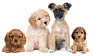 Insurance Services for Dog Business