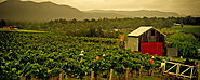 Hunter Valley Vineyards and Wineries