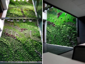 Spain's Largest Vertical Garden Cleans Air Inside Office Building