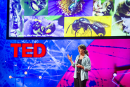 TED Talks: Marla Spivak: Why Bees Are Disappearing | Environment on GOOD
