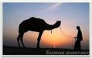 Enjoy the Camel Safari and Serenity in Pushkar