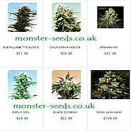 Regular sensi seeds are available at Monster Seeds UK