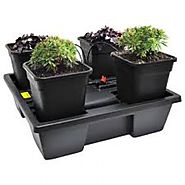 Complete hydroponics grow kit at Senua-Hydroponics