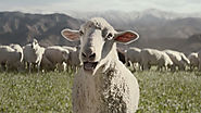 Old Sheep Learn New Tricks in Honda's Amusing Super Bowl Commercial
