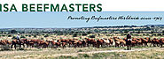 Beefmaster Cows for Sale in Texas