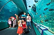 Explore Reef HQ Aquarium