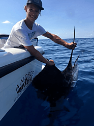 Summer Sailfish