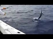 Deep Sea Fishing Charters Fort Lauderdale - Youtube