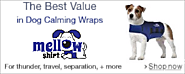 Search and Rescue Dog Collar -