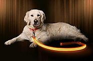 LED Dog Leash - USB Rechargeable - Make Your Dog More Visible & Safe - 6 Colors (Red, Blue, Green, Pink, Orange & Yel...
