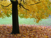 Fall Is Coming: Is Your Furnace Ready?