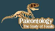 Paleontology - The study of Fossils - General Knowledge | Mocomi Kids
