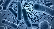 22 Cases of Bacteria Contaminated Food Recalls in the UK - DDS International