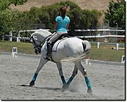 Best Horse Riding Academy in California