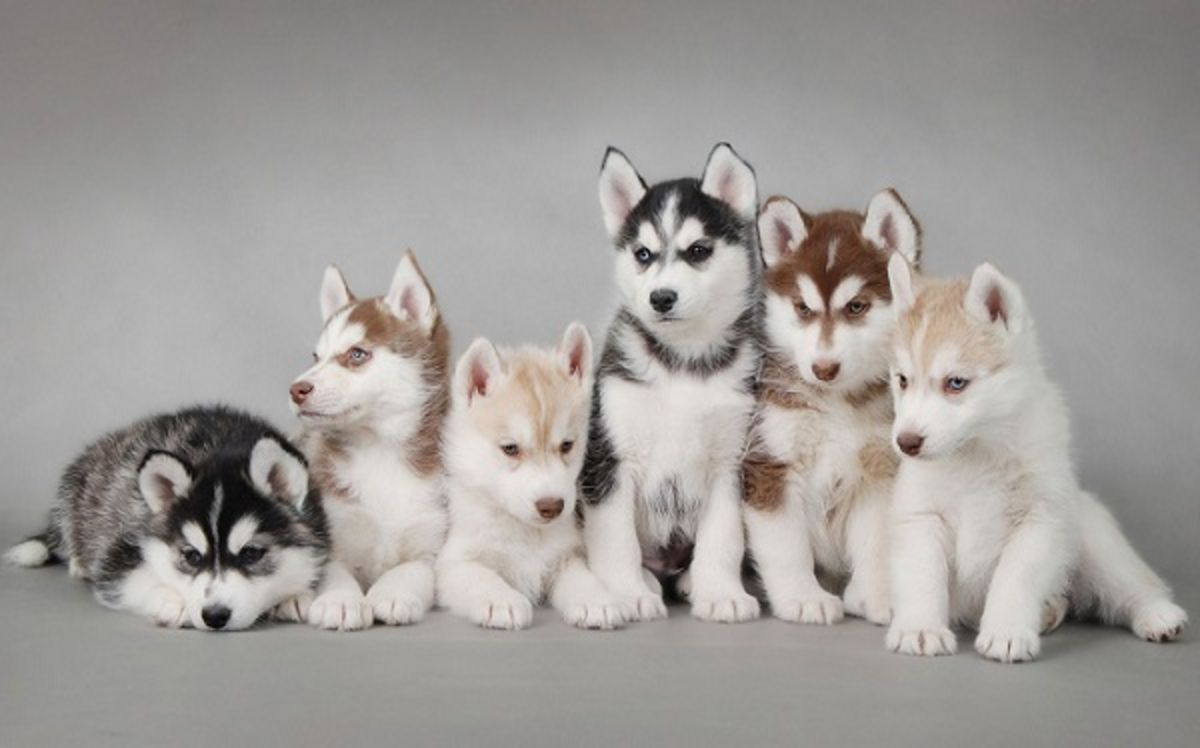 Headline for Top 10 Cutest Dog Breeds