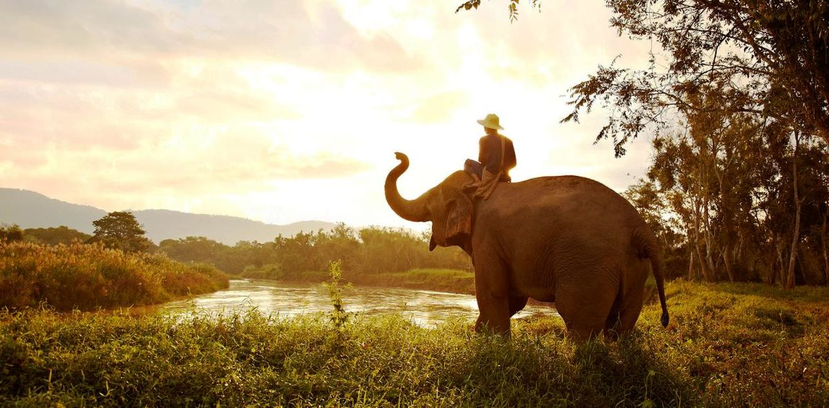 Headline for Fun Facts about Elephants – The Lovable Pachyderms