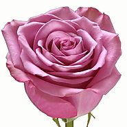 Purchase Roses In Bulk At Wholesale Rate