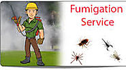Best Fumigation Services for bed bugs in Brisbane