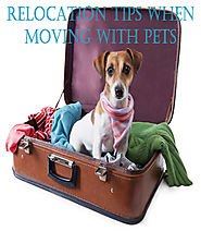 Relocation Tips when Moving with Pets