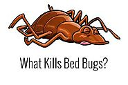 Bed Bug Treatment Toronto