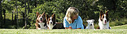 The Two Sides of Dog Training: The Right and the Wrong Way | Susan Garrett's Dog Training Blog