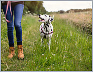 Tips to Help Your Dog Successfully Go Off-Leash