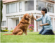 Building Trust with Your Dog with Off-Leash Training