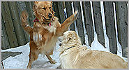 Dog Trainers for Aggressive Behavior