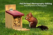 Pet Photo Editing Services | Animal Photography Editing Services for Wildlife Photographers