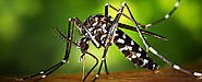 Is this the Truth about the Zika Virus? - LifestylePrescriptions
