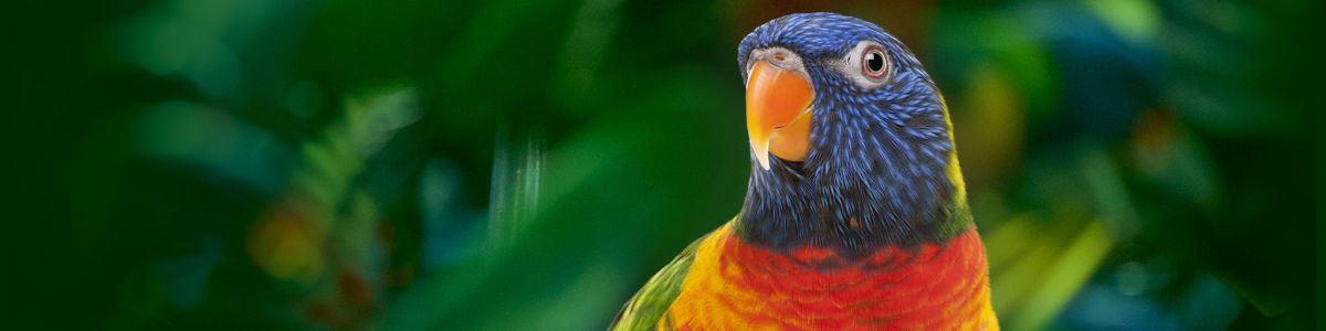 Headline for Wild Life Attractions in Gold Coast – Interacting and Witnessing Gold Coast Wildlife