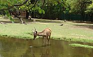 Manipur Zoological Garden - Tours to Manipur Zoological Garden in Imphal, Travel to Manipur Zoological Garden in Imph...