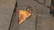 Video of rat carrying pizza into NYC subway station blows up on Twitter