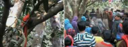 News in Hindi: Minor student raped, murdered bodies hung on trees