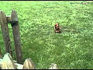 Do Underground Electric Dog Fences Work? (The Test 3 Days After Do-It-Yourself Install) Wiener Dog