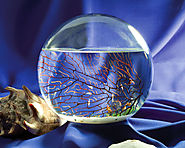 EcoSphere Closed Ecosystems