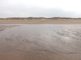 Marram Grass and Beach Detecting....