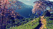 Golden Triangle Tour with Darjeeling Tea Estate #India