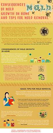 Consequences of Mold Growth in home and Tips for Mold Removal