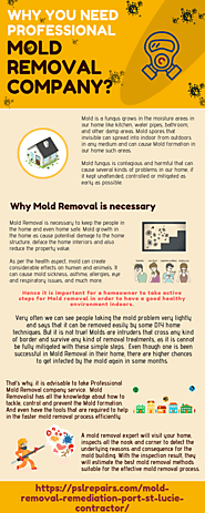 Why you need Professional Mold Removal Company?