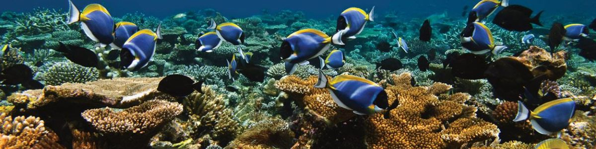 Headline for Things You Must Know for Diving in Maldives – An Unforgettable Underwater Experience