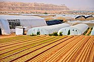 How to grow vegetables and fruits in a kibbutz