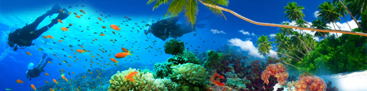 Headline for Top 05 Beaches for Scuba Diving in Sri Lanka – Delve Deeper into the Blue