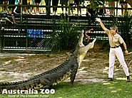 Watch the Animals at Australia Zoo