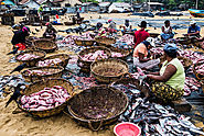 Experience the Negombo Fish Market