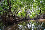 Explore the Muthurajawela Mangrove Forest and Wetlands