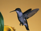 Hummingbird Is Google's Biggest Algorithm Change In 12 Years