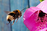 5 ways to create a bee-friendly garden - Nature Holds the Key