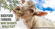 What do goats really eat?