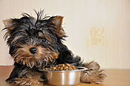 Recommendations from Your Vet | Vet Recommended Dog Food